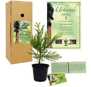 Mammutbaum Hochzeitsgeschenk