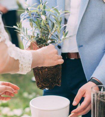 Baum pflanzen Hochzeit