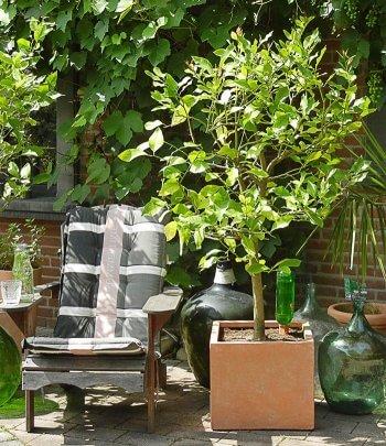 Hochzeitsbaum Garten