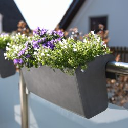Hochzeit Pflanze