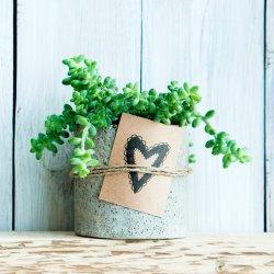 Pflanze zur Hochzeit