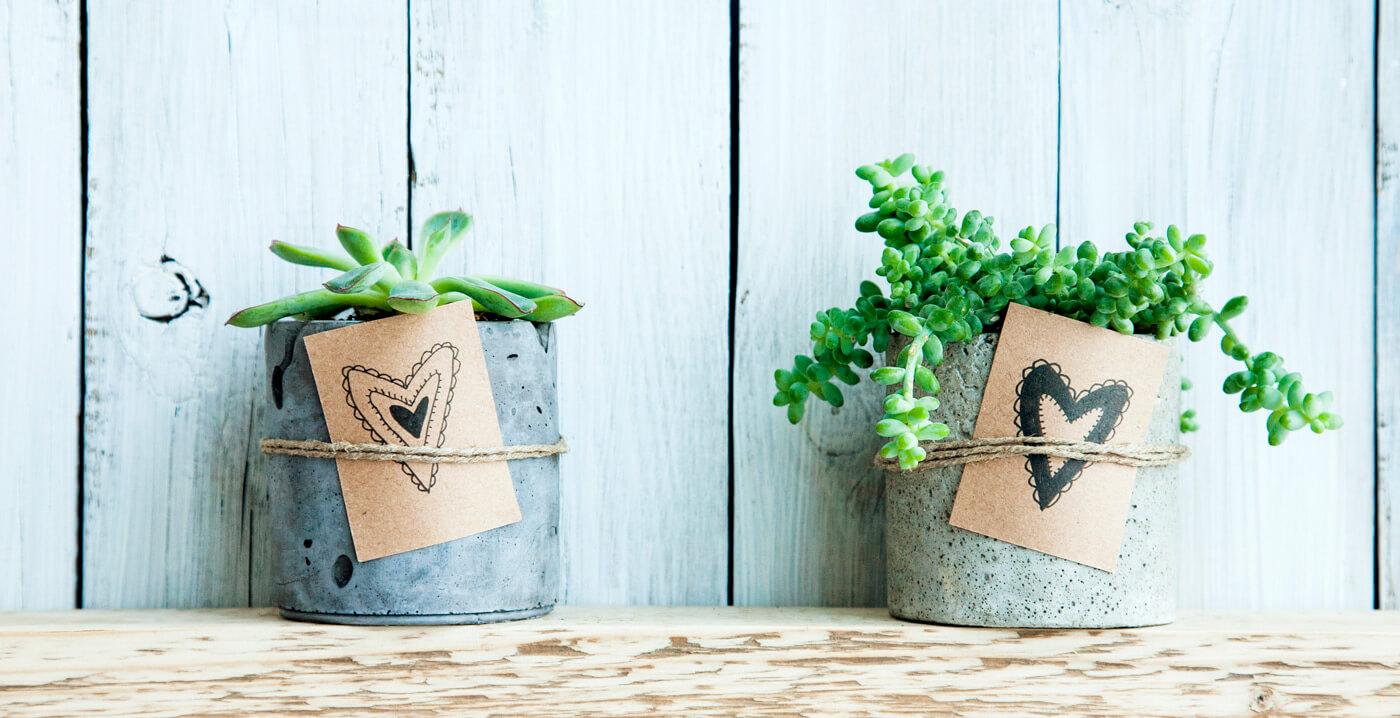 Pflanze Zur Hochzeit Schenken 5 Schone Nachhaltige Tipps Ideen