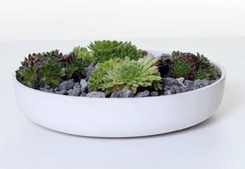 Schale Pflanzen
