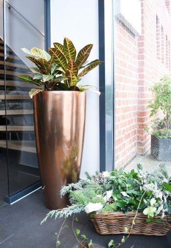 Welche Pflanze zur Hochzeit schenken