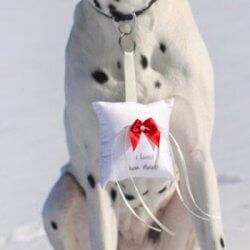 Hund Ringträger