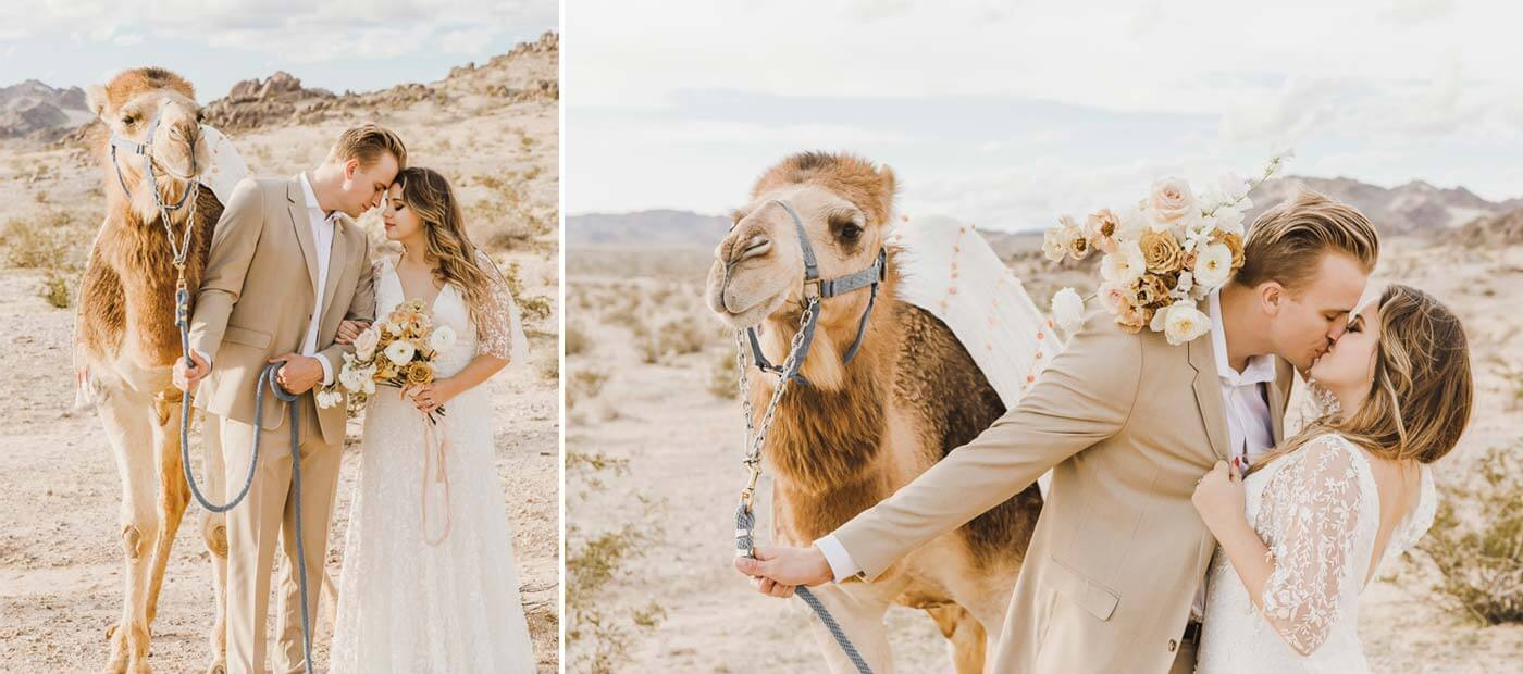 Kamel Hochzeit