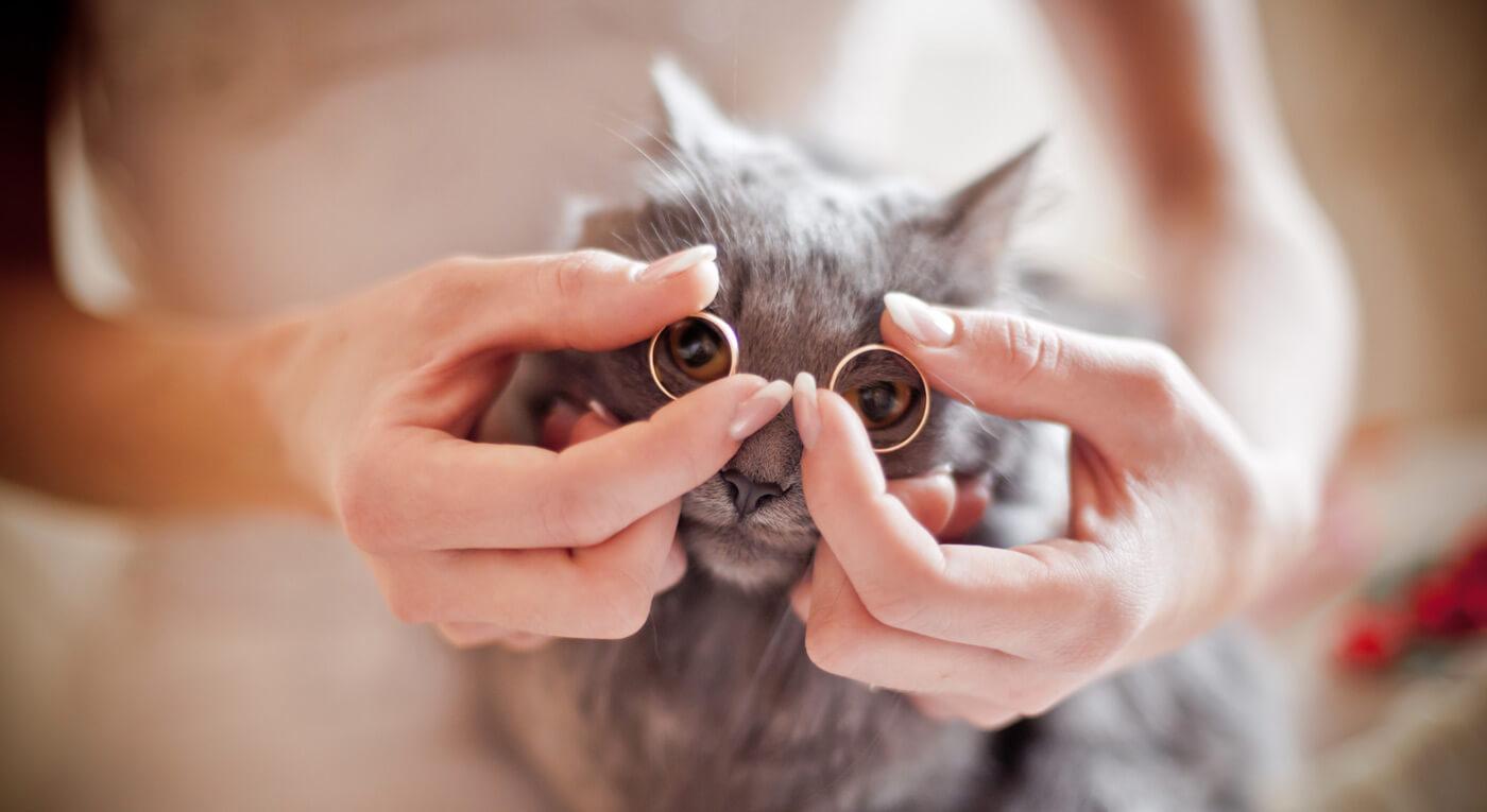 Katze Hochzeit Ringe