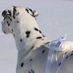 Ringkissen für Hunde