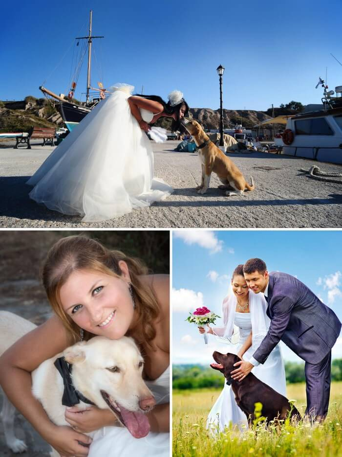 Hochzeit Tiere