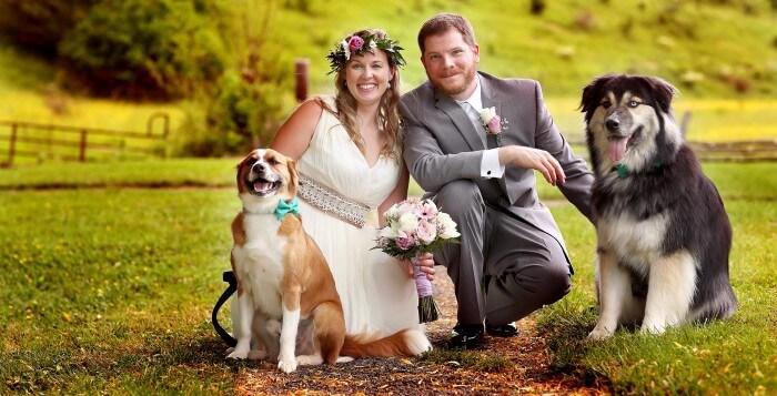 Hundebilder Hochzeit