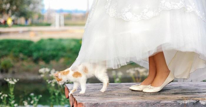 Hochzeit mit Katze