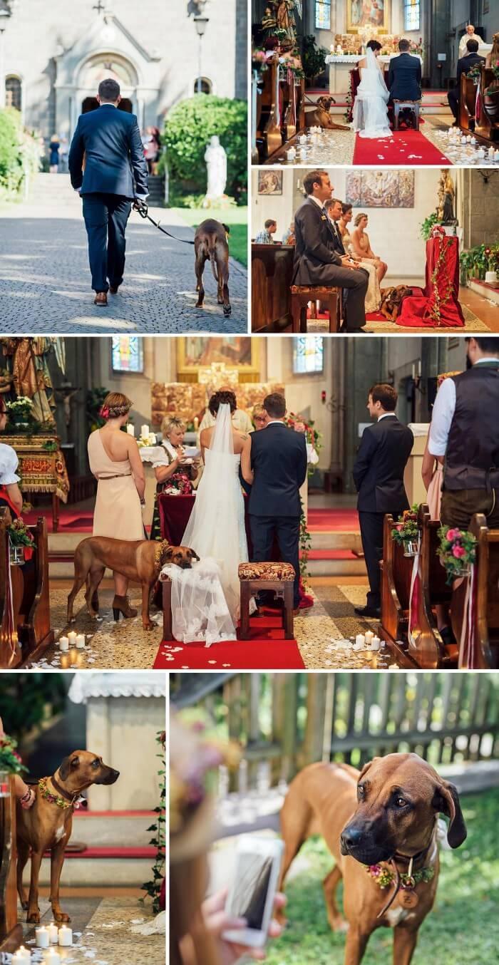 Hund zur Hochzeit