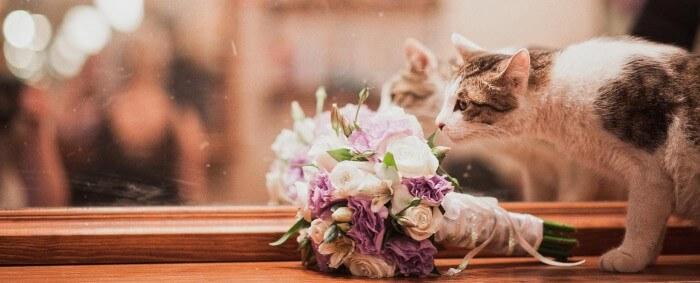 Katze bei der Hochzeit